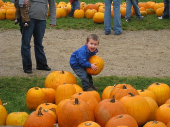 Pumkin_patch_014